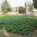 Vegetable garden at Pharsar Home